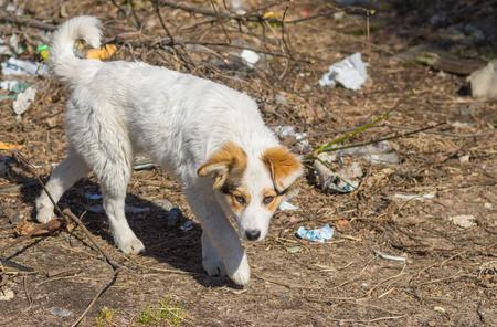 scrapheap: Stray dog walks through scrap-heap Stock Photo