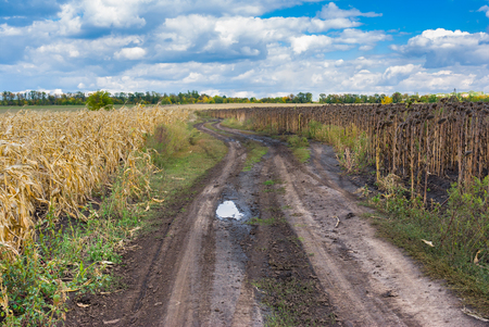 earth road: Late summer landscape with earth road between maize and sunflower fields in central Ukraine