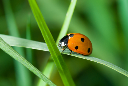 Journey of lonely ladybird in green grass jungle Stock Photo