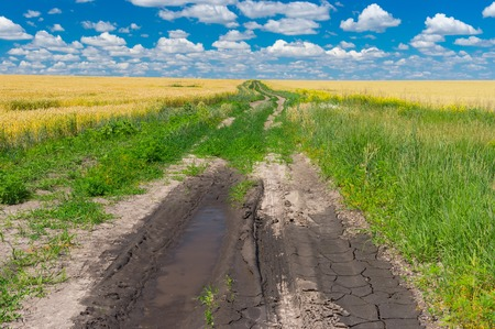 Summer landscape with earth road among of wheat fields Stock Photo