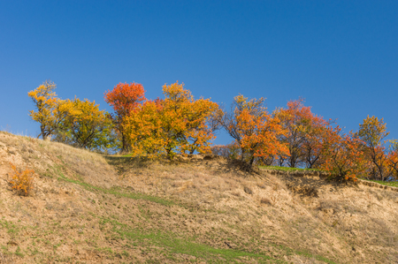 gully: Wild apricot trees on a hill at autumn season in Ukraine Stock Photo