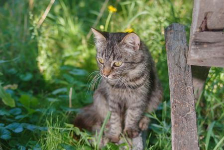 secluded: Young tabby cat hiding in secluded nook in summer garden