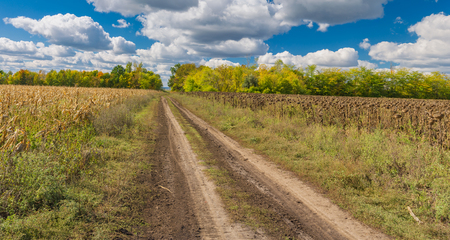 earth road: Autumnal landscape with earth road between maize and sunflower fields in central Ukraine