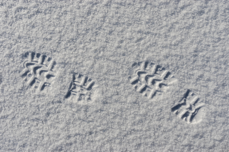 footsteps: High contrast image of footsteps in snow