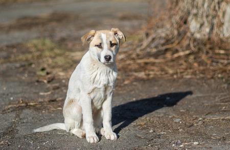 Portrait of sweet stray puppy