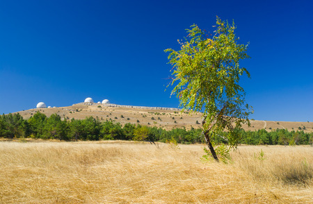 tableland: Beautiful autumnal landscape with lonely birch on Ai-Petri mountain tableland in Crimea, Ukraine.