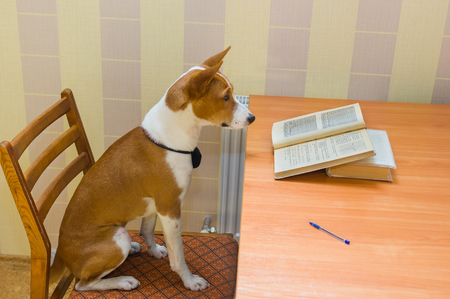 assiduous: Back to school - smart school dog reviews course of mathematics. Stock Photo
