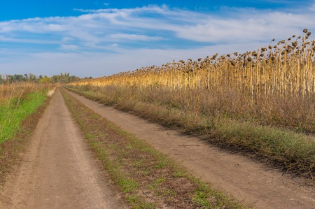 earth road: Autumnal landscape with earth road on the edge of sunflower field in central Ukraine