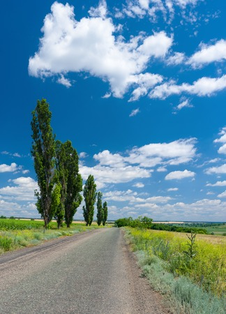 ukranian: Country road, high poplars and cloudy sky - typical Ukranian rural landscape at summer. Stock Photo