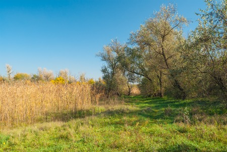 rushy: Fall landscape with forest clearing in central Ukraine Stock Photo