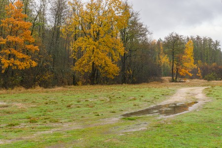 Moist autumnal landscape with sandy road to mixed forest