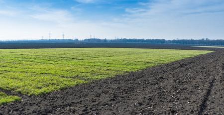 siembra: Paisaje ucraniano con cultivos de invierno. Foto de archivo
