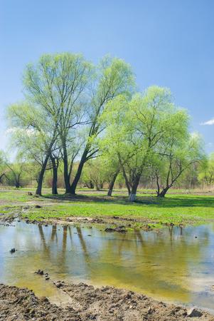 Spring tide in Ukrainian rural area.