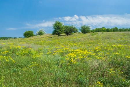 gramma: Wild Ukrainian steppe at start of summer season.