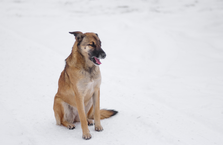 Outdoor portrait of cute mixed-breed, stray dog sitting on a fresh snow at winter season Stock Photo
