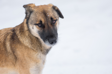 Outdoor portrait of cute mixed-breed, stray dog at winter season