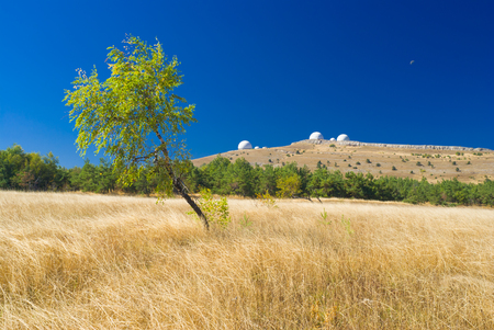 Beautiful landscape with lonely birch from Ai-Petri mountain tableland in Crimea, Ukraine.