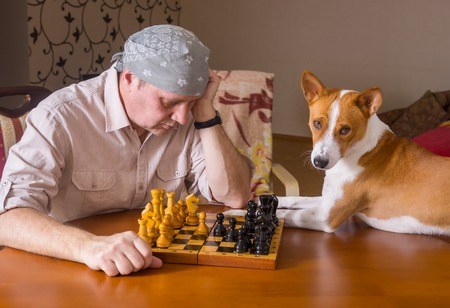 ludicrous: Smart basenji dog waiting for the master next move in a chess family tournament