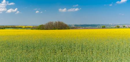 Spring landscape with flowering rape-seed fields near Dnepr city, Ukraine