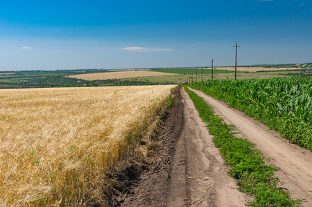 expanse: Earth road among maize and wheat agricultural fields in Ukraine Stock Photo