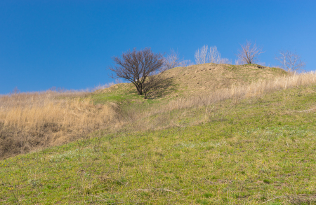 Landscape with wild apricot tree on a hill at early spring season Stock Photo