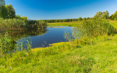 rushy: Pictorial summer landscape with small river Merla, Poltavskaya oblast,  Ukraine Stock Photo