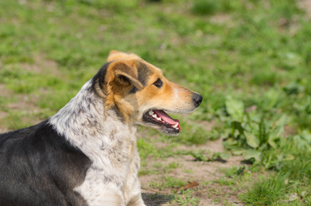 Portrait of mixed breed stray female dogs lying on a ground at sunny spring day Stock Photo