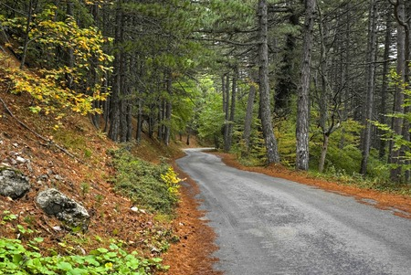 Empty road in a fall forrest.