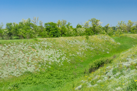 Ukrainian landscape with ravine overgrown with fresh weeds in May Stock Photo