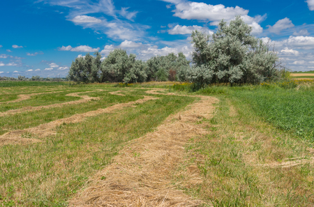 Summer landscape with mown hay on a water-meadow near Dnipro city, Ukraine Stock Photo