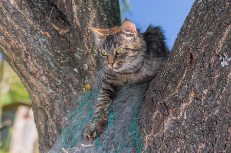 timorous: Young tabby cat hiding in secluded nook on a tree branch in summer garden Stock Photo