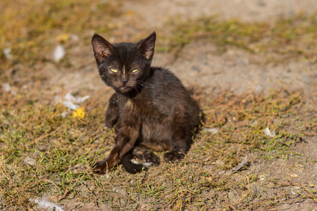 Outdoor portrait of young cat horrifying the poultry-yard Stock Photo