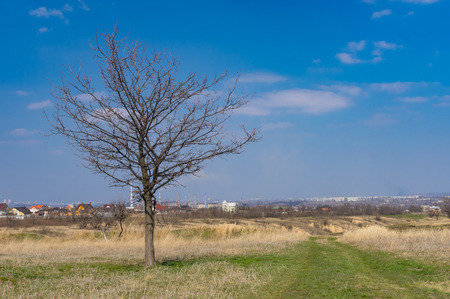 Seasonal landscape with earth road and lonely oak on the roadside in outskirts of Dnipro city, Ukraine