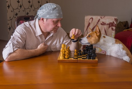 Basenji dog helping master with move on a next move in chess game 스톡 콘텐츠