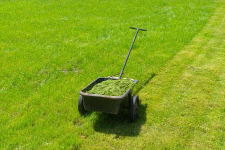 Wheel barrow filled with cut grass on a summer lawn Imagens