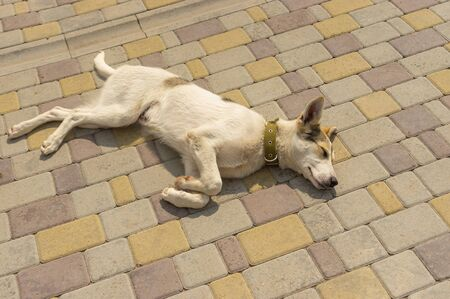 Adorable mixed breed young dog sleeping on a sidewalk