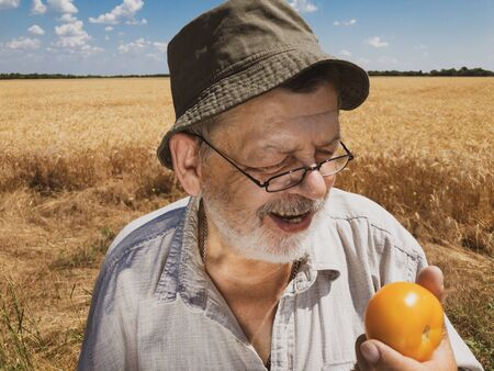 Outdoor portrait of bearded senior farmer smiling and ready to eat organic yellow tomato standing in wheat field