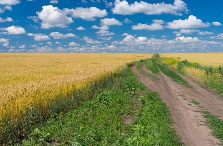 Ukrainian rural landscape with ripe wheat fields and earth road at summer season Stock Photo