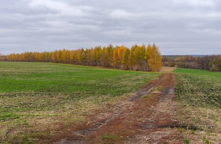 Autumnal landscape with an earth road between winter crops fields in central Ukraine