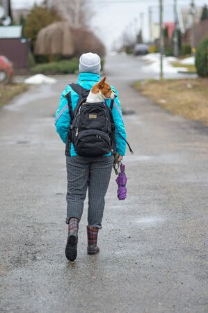Woman carrying Basenji dog inside backpack while walking on wet road at early spring season