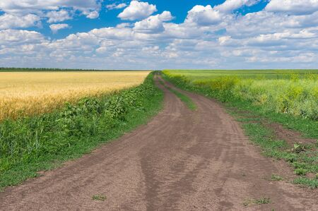 Earth road between ripe wheat and flowering rape seed fields near Dnipro city at summer season, central Ukraine