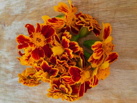 Top view on fresh cut buds of Tagetes patula (french marigold) flowers lying on a wooden surface drying for using in hot flavored drinks in Ukraine