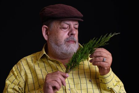 Nice low key portrait of a thoughtful Caucasian bearded senior admiring small branch of juniper tree 版權商用圖片