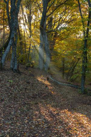 Landscape with sunbeam in morning beech forest in Crimean peninsula at fall season Standard-Bild