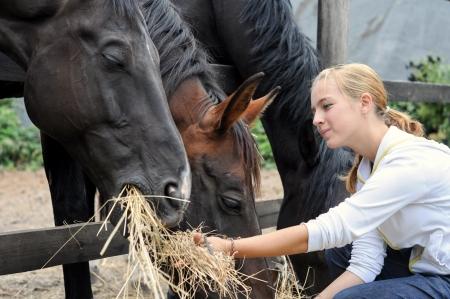 girl feeding horses in the farm in summer day