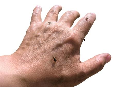 infective: mosquitos en la mano del hombre, aislado en blanco