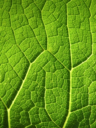 origins:           leaf texture