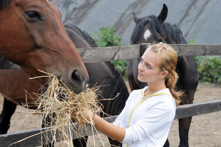 teenage girl feeding horses in the farm