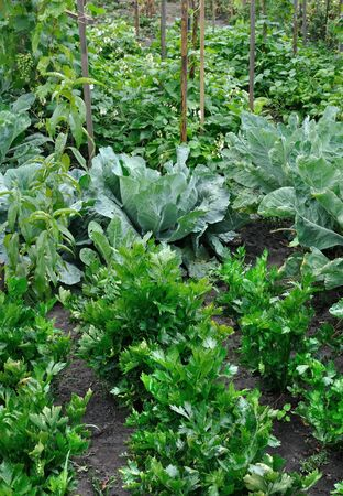 organically cultivated various vegetables in the vegetable garden, vertical composition