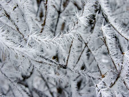frozen branch  in the winter nature, freezing crystals on the branch